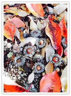 秋!の写真・画像素材[847472]