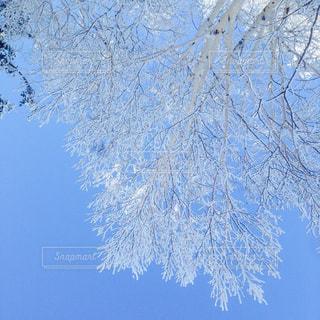 雪の木の写真・画像素材[880146]