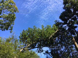 青空の写真・画像素材[1094456]