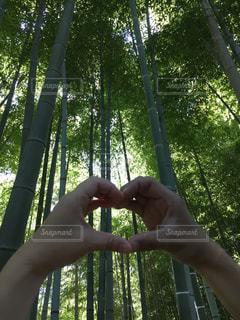 木の手 - No.1112809