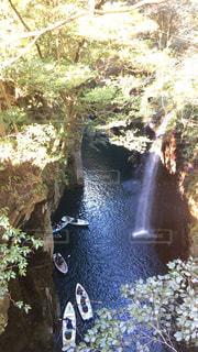 背景の木と滝の写真・画像素材[1194892]