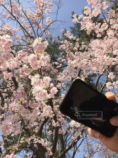 花を持っている手の写真・画像素材[1445354]