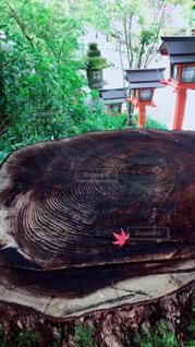 京都の秋!の写真・画像素材[1479369]