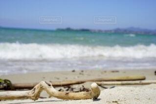 海の隣の砂浜の上に座っている鳥の写真・画像素材[4688610]