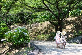 夏の日の散歩道の写真・画像素材[4750466]