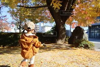 昼下がりの秋散歩の写真・画像素材[4812808]