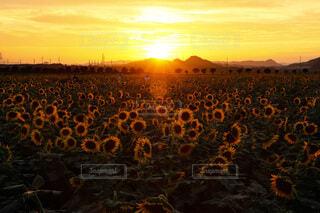 夏の終わりの夕焼けの写真・画像素材[4817525]