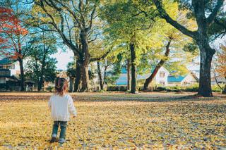 黄色い自然の絨毯の写真・画像素材[4818262]