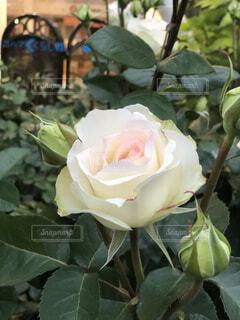 花のクローズアップの写真・画像素材[4690920]