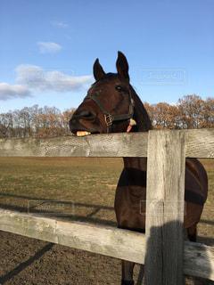 木製のフェンスの横に茶色の馬立っての写真・画像素材[901966]