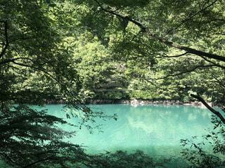 エメラルドグリーンの透明な水面の写真・画像素材[4709545]