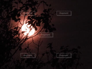 木の隙間から見えるお月さまの写真・画像素材[4843570]
