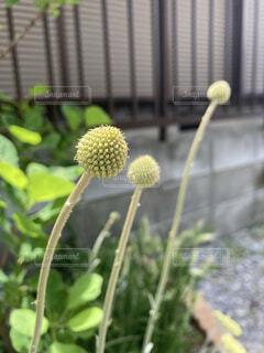 花園の近くの写真・画像素材[4942406]