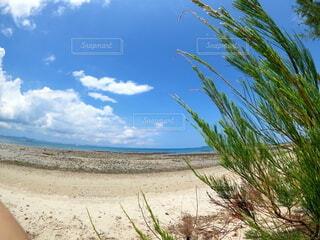真夏のビーチの写真・画像素材[4709624]