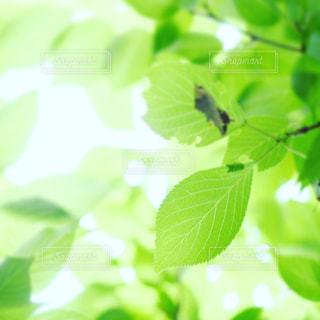 自然の写真・画像素材[209898]