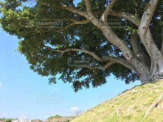 近くの木の横にある丘の中腹の写真・画像素材[1164350]