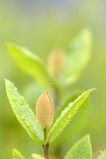 近くの花のアップの写真・画像素材[1179249]