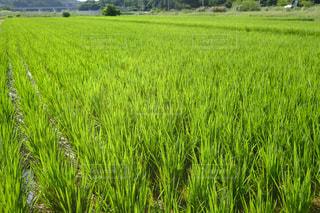 近くに緑豊かな緑のフィールドのの写真・画像素材[1179257]