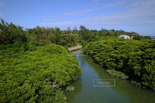 木々 に囲まれた水の体の写真・画像素材[1180418]