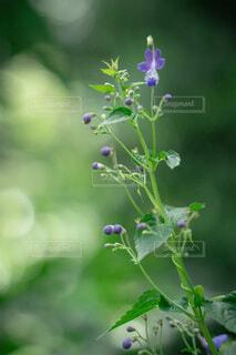 花のクローズアップの写真・画像素材[4708046]