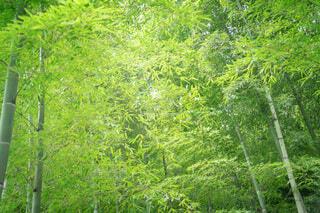 森の中の緑の写真・画像素材[4708048]