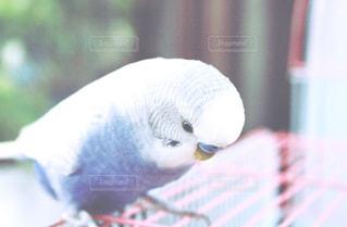 近くに鳥のアップの写真・画像素材[737832]