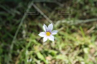 近くの花のアップの写真・画像素材[1207857]
