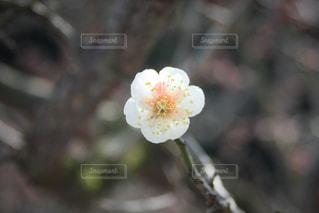 近くの花のアップの写真・画像素材[1207859]