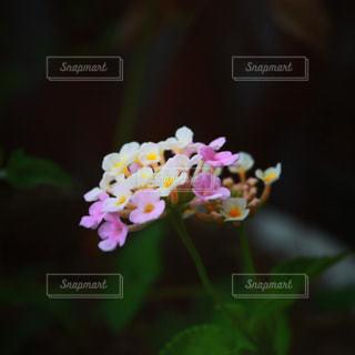 近くの花のアップの写真・画像素材[1207860]