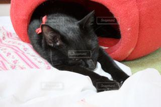 猫,お部屋,昼寝,のんびり,眠い,ごろごろ,のび