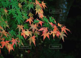 近くの植物のアップの写真・画像素材[1611692]