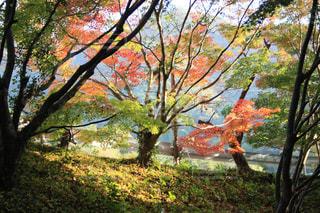 公園の木の写真・画像素材[1611705]