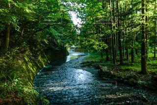 五斗目木川の写真・画像素材[4714660]