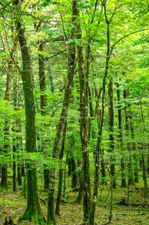 夏の森林浴の写真・画像素材[4714688]