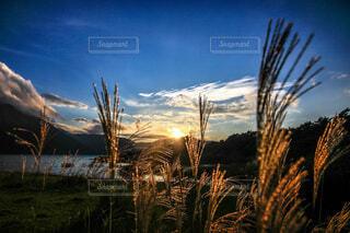 夕暮れどきと秋の本栖湖の写真・画像素材[4815227]