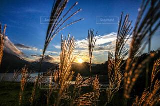 夕暮と秋の本栖湖の写真・画像素材[4815226]