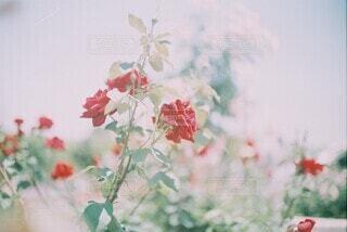 I love you.の写真・画像素材[4719359]