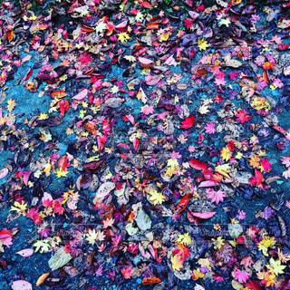 色とりどりの季節たちの写真・画像素材[775479]