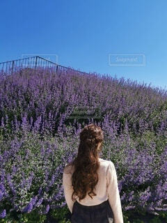ラベンダーの前に立っている女性の写真・画像素材[4725739]