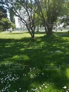 緑いっぱいの公園の写真・画像素材[4768455]