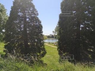 公園にある大きな木の写真・画像素材[4768463]