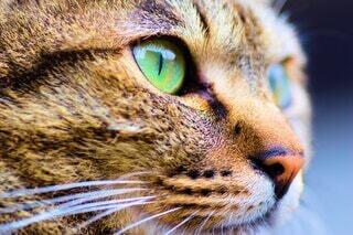 猫のクローズアップの写真・画像素材[4723851]