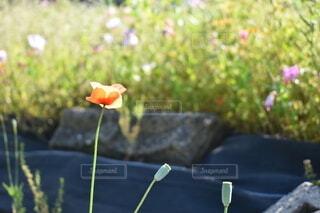 夕方の花の写真・画像素材[4722956]