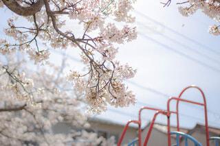 花のクローズアップの写真・画像素材[4788049]