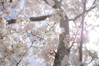 春の光の写真・画像素材[4788053]