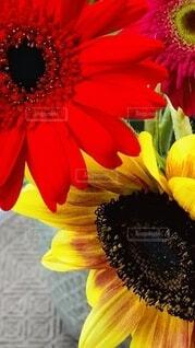 花のクローズアップの写真・画像素材[4790404]