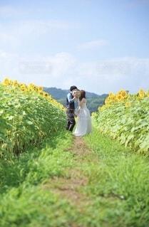 だいすきな夏、思い出のひまわり畑。の写真・画像素材[4725300]