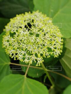 緑の植物のクローズアップの写真・画像素材[4731926]
