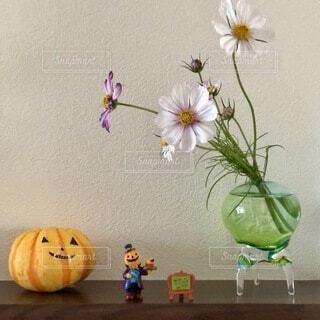 花,屋内,コスモス,壁,ハロウィン,かぼちゃ