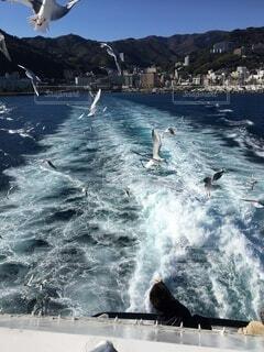熱海。初島に渡る船に遊びに来たカモメの写真・画像素材[4759818]